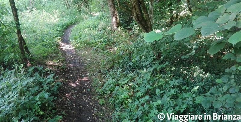 Il sentiero 2 del Parco delle Groane e della Brughiera