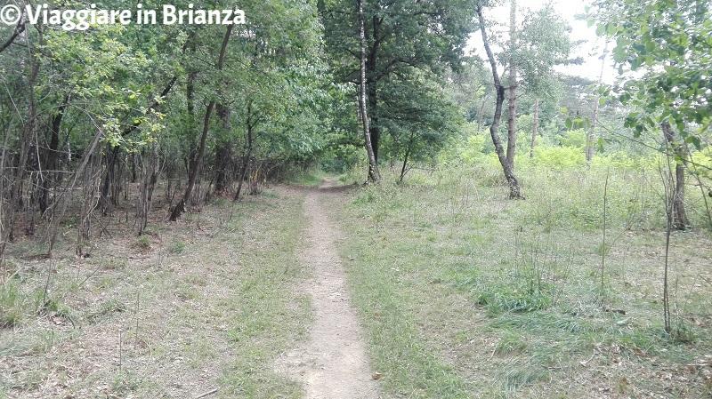 Il sentiero per il Lago Azzurro nel Parco della Brughiera