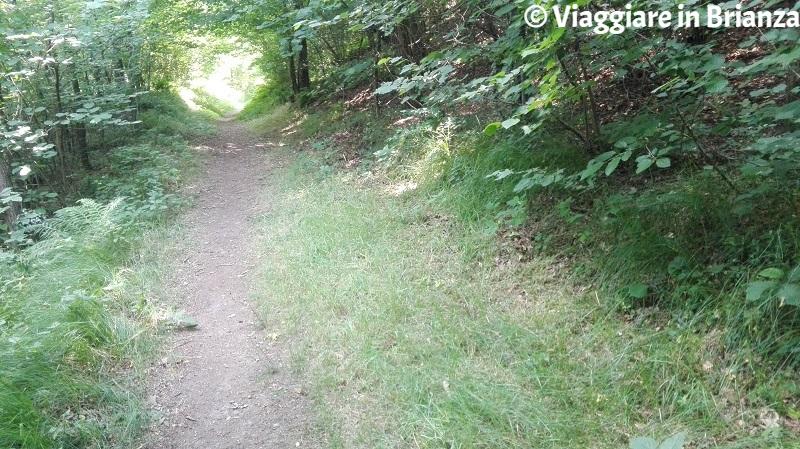 La Valle del Seveso nel Parco della Brughiera
