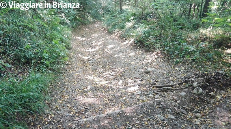 La discesa del sentiero 9 del Parco della Brughiera