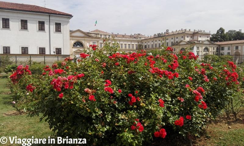 Le rose del Roseto Niso Fumagalli