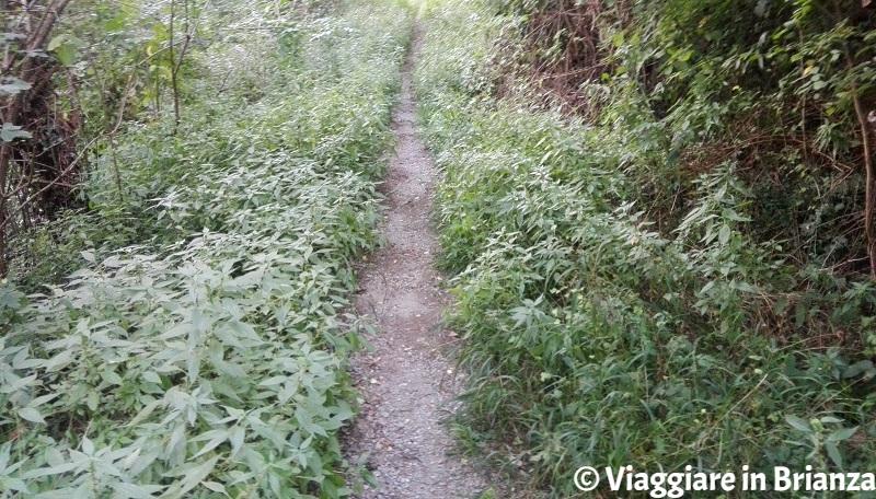 Il sentiero per il Castello di Montorfano