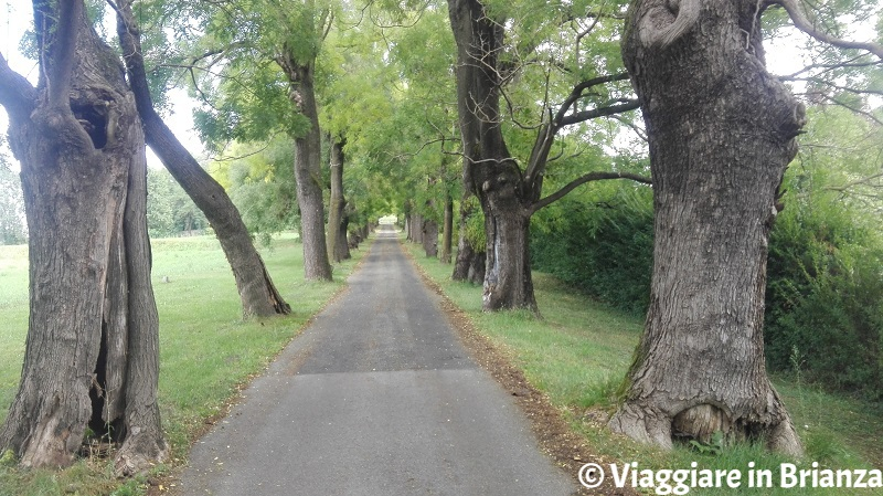 Il viale di accesso a Villa Il Beldosso