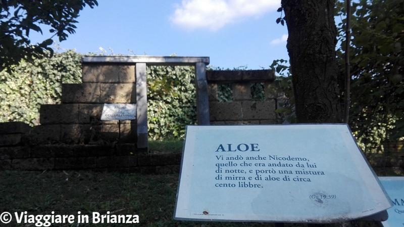 Le essenze arboree di Villa Sacro Cuore