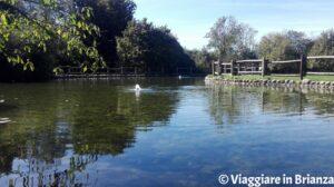 Il laghetto del Bosco delle Querce di Seveso