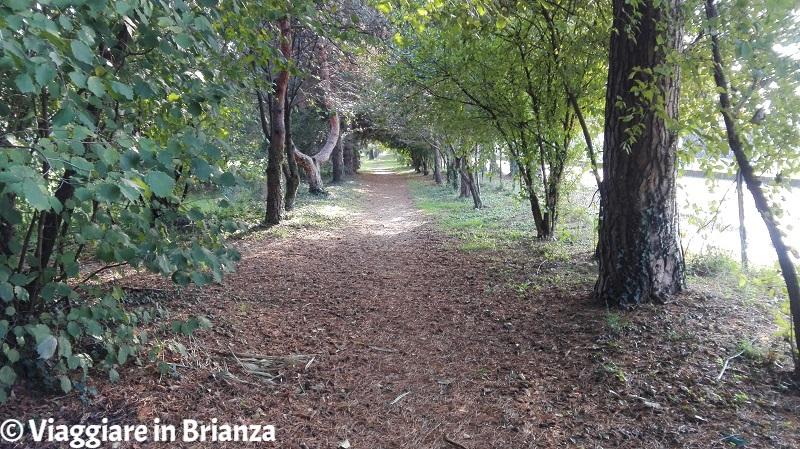 Il sentiero nel Parco di Villa Dho