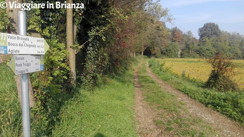 Cosa fare a Triuggio, il Bosco della Brovada
