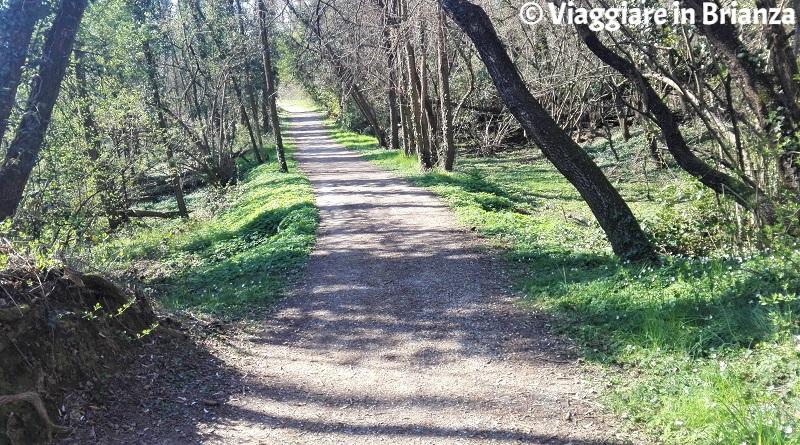 Cesano Maderno, la pista ciclabile 22 del Parco delle Groane