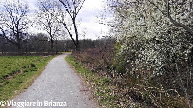 Il paesaggio del sentiero 28 del Parco delle Groane