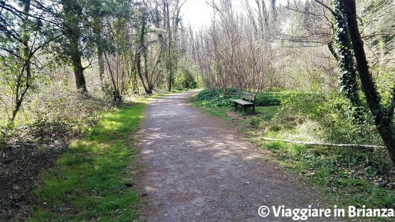 La panchina sul sentiero 28 del Parco delle Groane a Barlassina
