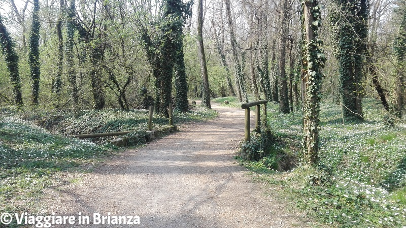 La pista ciclabile dell'Oasi Lipu a Cesano Maderno