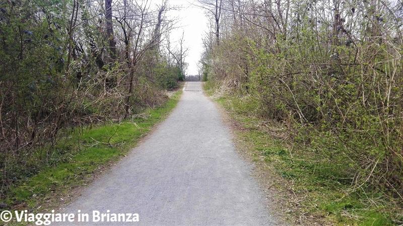 Il ponticello del sentiero 28 del Parco delle Groane