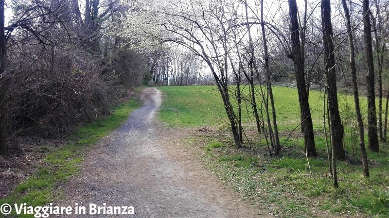 La salita del sentiero 28 del Parco delle Groane