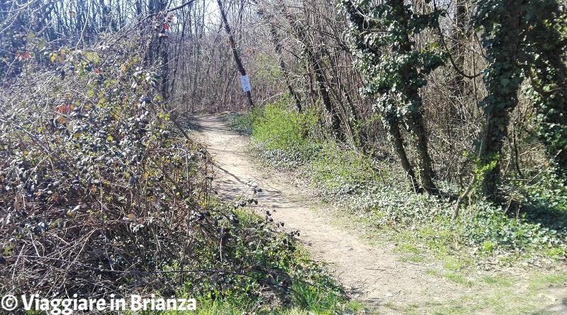 Un sentiero pedonale nell'Oasi Lipu di Cesano