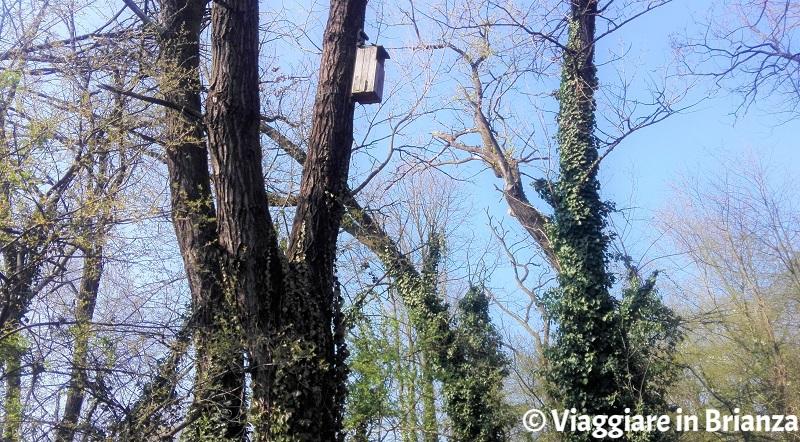 Il nido dell'allocco nell'Oasi Lipu di Cesano Maderno