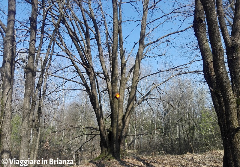 Nonno albero nell'Oasi Lipu di Cesano Maderno