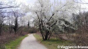 Parco delle Groane, la pista ciclabile 27