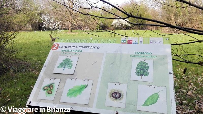 Un Sentiero per Tutti: alberi a confronto