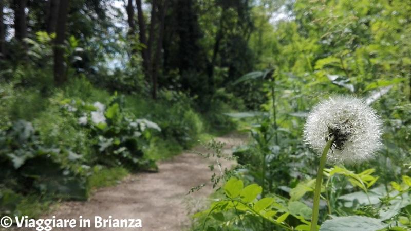 Il Bosco Urbano di Lissone a bici e a piedi