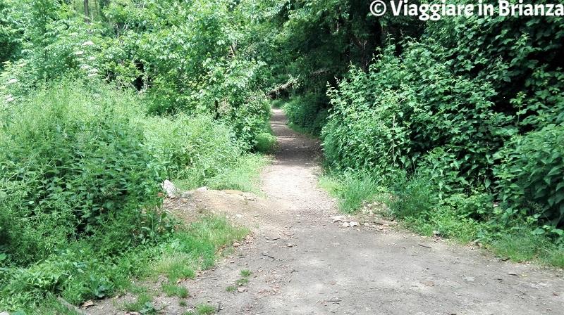 Il sentiero per il laghetto di Lissone