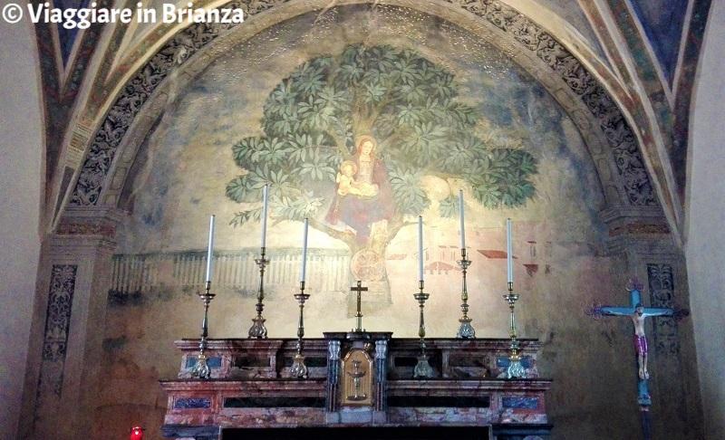 L'affresco della Madonna dell'Albero di Carimate