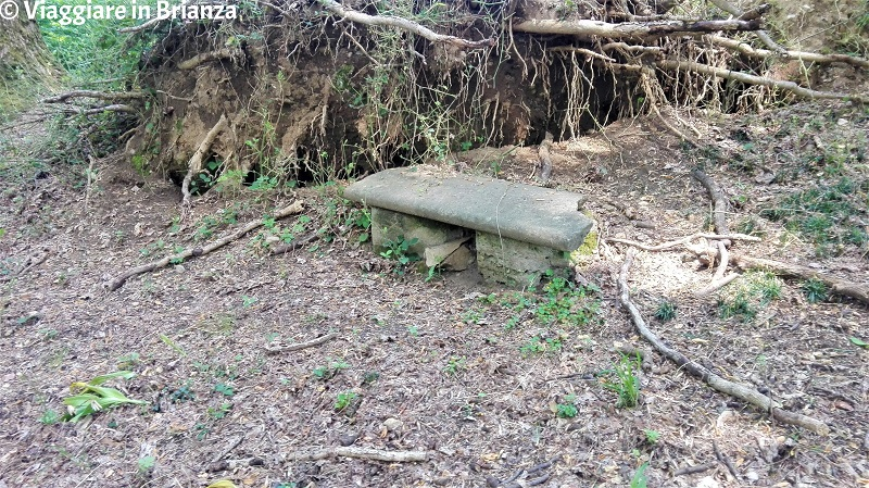 La panchina dei liriodendri a Villa Besana