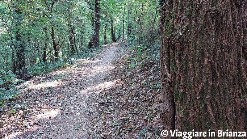 Cosa vedere a Rogeno, i sentieri nel bosco di Casletto
