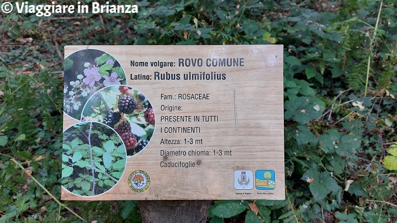 Il sentiero nel bosco di Casletto a Rogeno