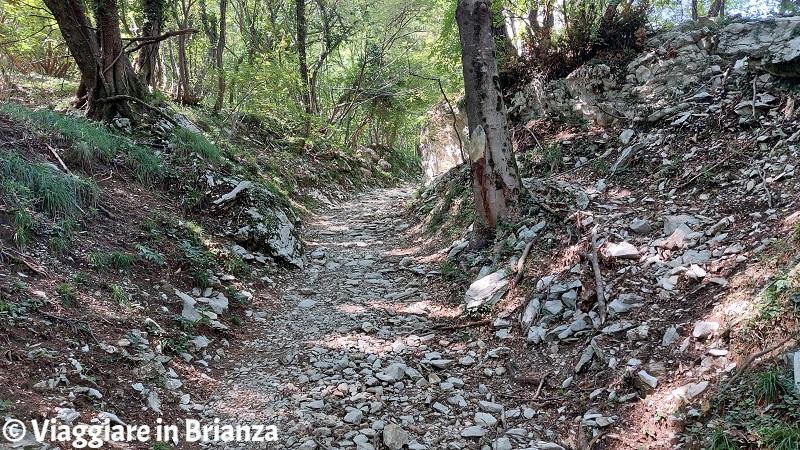 Il sentiero per la Croce Pessina a Erba sul Monte Panigas