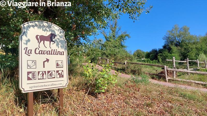 Cosa fare a Monguzzo, l'Agriturismo La Cavallina